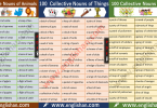 Collective Nouns List PDF