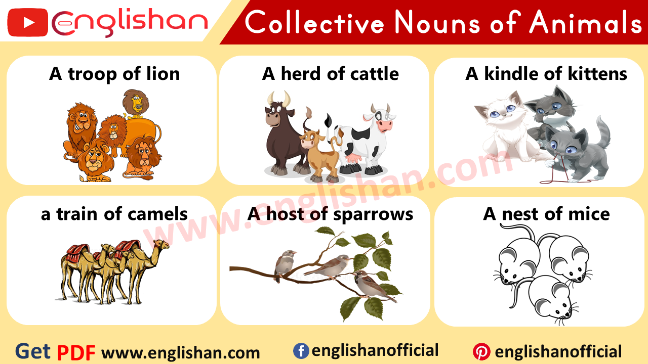 50 Examples Of Collective Nouns