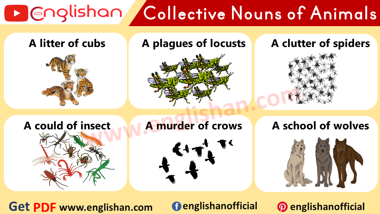 Collective Nouns List PDF Free Download
