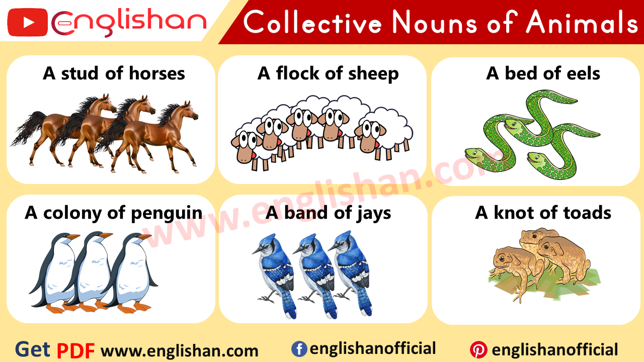 100 Examples Of Collective Nouns Of Animals