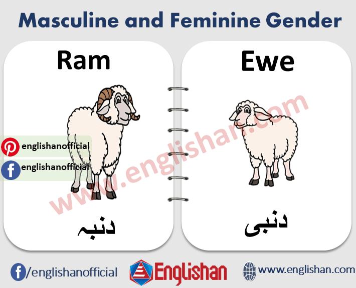 Masculine and Feminine Animals