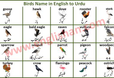 Birds Name in English to Urdu