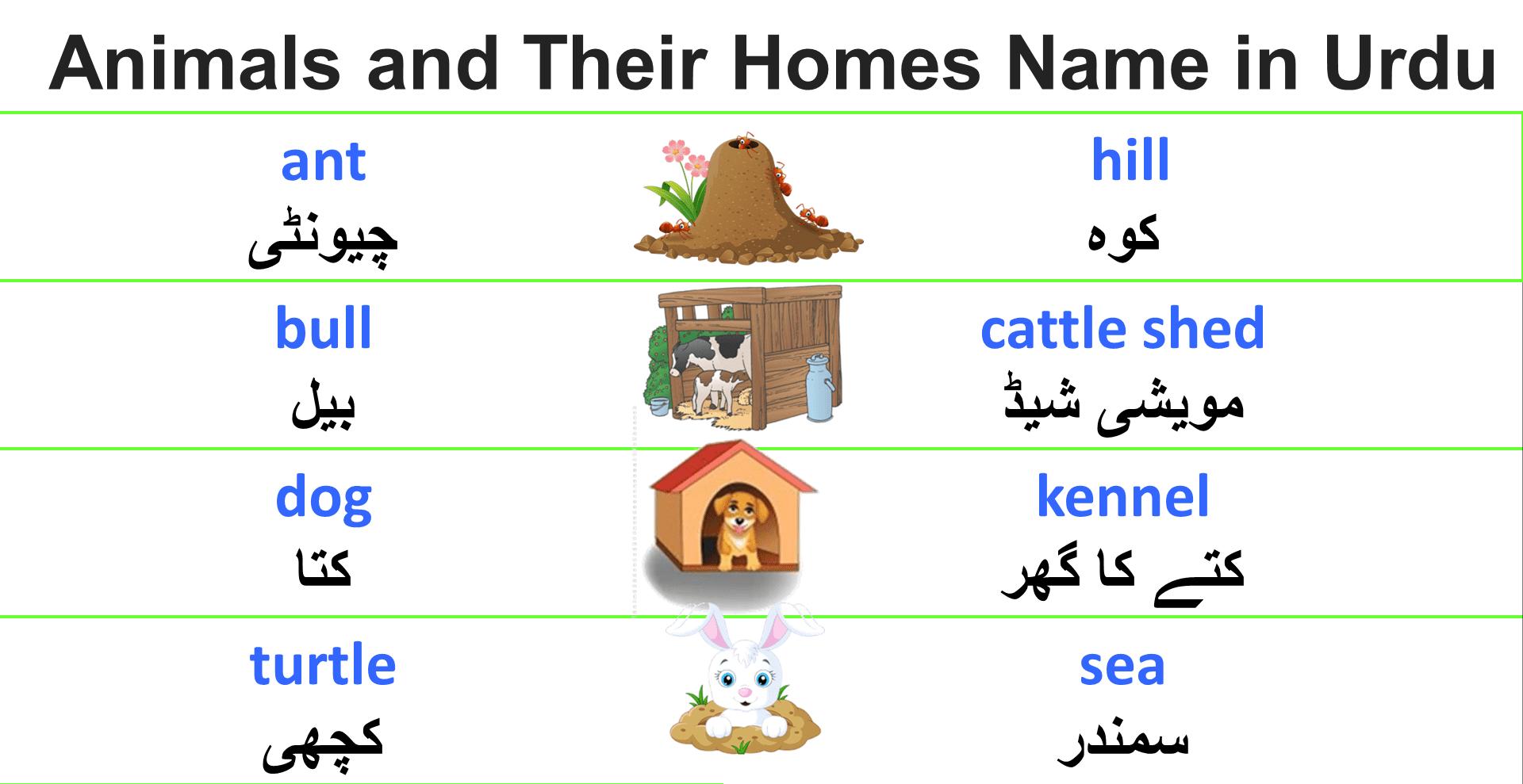 50+ Animals and Their Homes Name PDF | Englishan