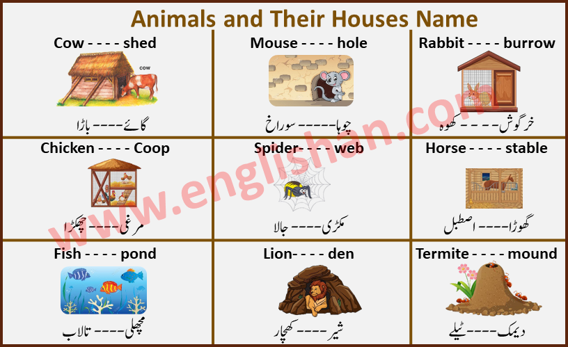Animals and Their Houses Name