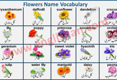 Flowers Name with Images in Urdu to English PDF