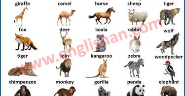 Wild Animal Picture Vocabulary
