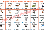 Animals and Their Sounds with Picture Vocabulary